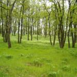 woods-1539971